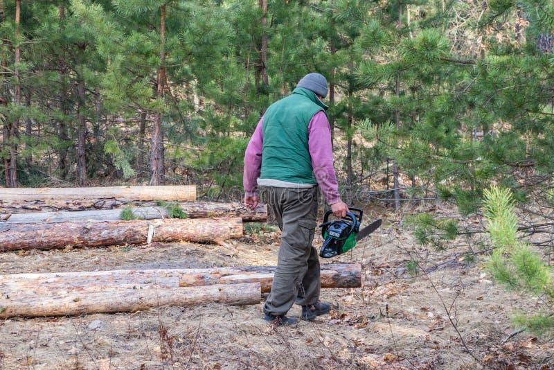 Υλοτόμος με ένα αλυσιδοπρίονο διαθέσιμο στο δάσος στοκ φωτογραφίες