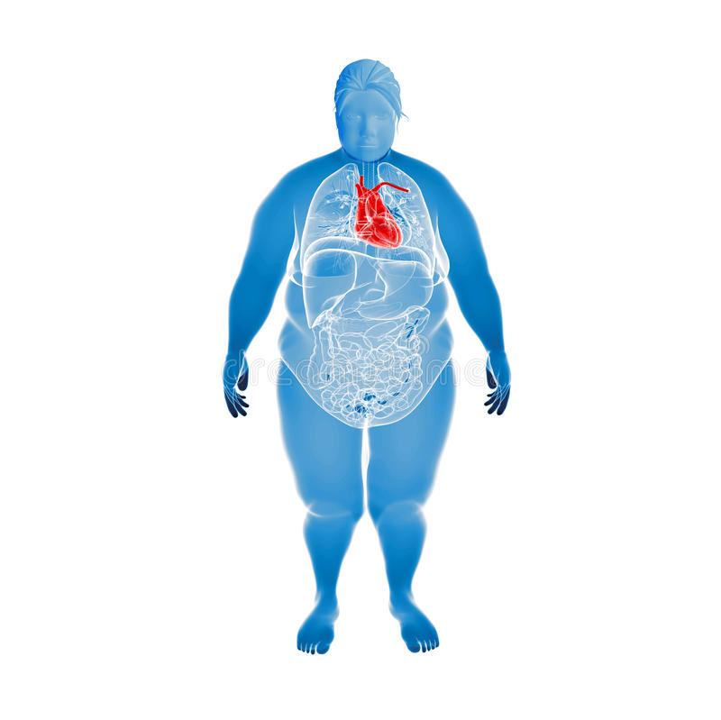 Υπέρβαρο θηλυκό με την τονισμένη καρδιά διανυσματική απεικόνιση