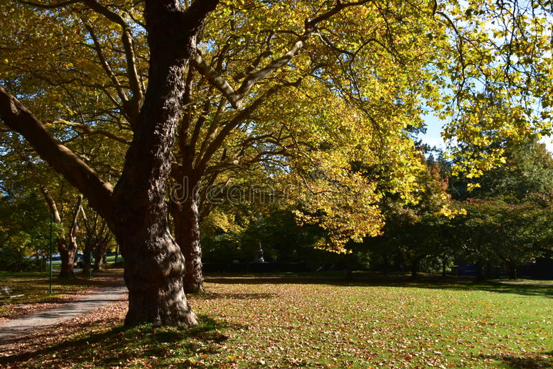 Υπέροχα δέντρο στοκ εικόνα με δικαίωμα ελεύθερης χρήσης