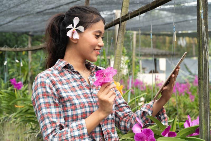 Οι θηλυκοί κηπουροί φορούν τα πουκάμισα καρό Υπήρξαν ορχιδέες που παίρνουν τα αυτιά, το χέρι που κρατά το λουλούδι ταμπλετών και  στοκ φωτογραφίες