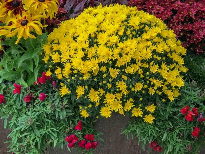 Υπαίθρια λουλούδια πτώσης στοκ εικόνα