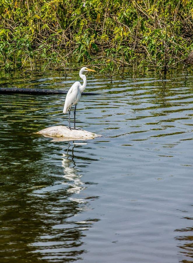 Υπαίθριος χαριτωμένος πουλιών στοκ εικόνες