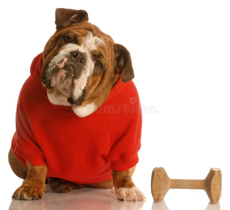υπακοή σκυλιών που εκπ&alpha στοκ εικόνες
