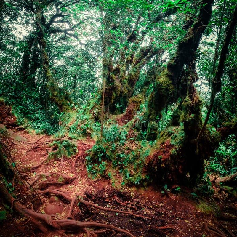 Υπερφυσικά χρώματα του θλιβερού τροπικού δάσους στοκ εικόνα