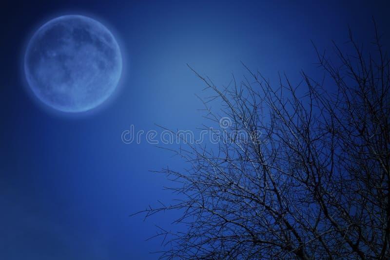 Υπερφυσική έννοια φαντασίας - κλάδοι πανσελήνων και δέντρων στο υπόβαθρο νυχτερινών ουρανών; στοκ φωτογραφίες
