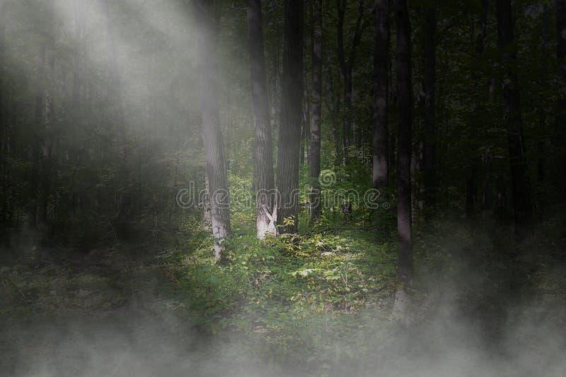 Υπερφυσικό σκοτεινό δάσος, υπόβαθρο ξύλων στοκ φωτογραφίες