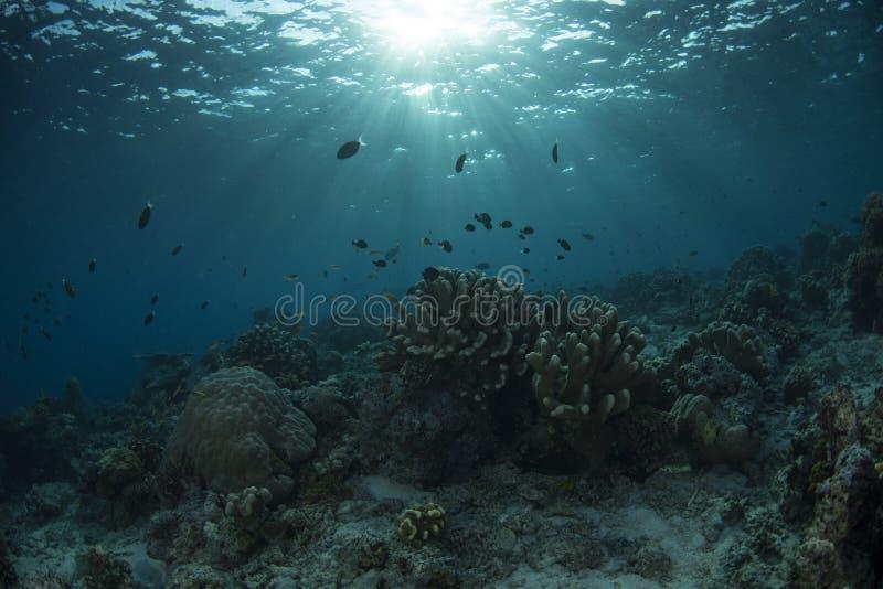 Υποβρύχια ζωή του νησιού Sipadan στοκ φωτογραφία με δικαίωμα ελεύθερης χρήσης