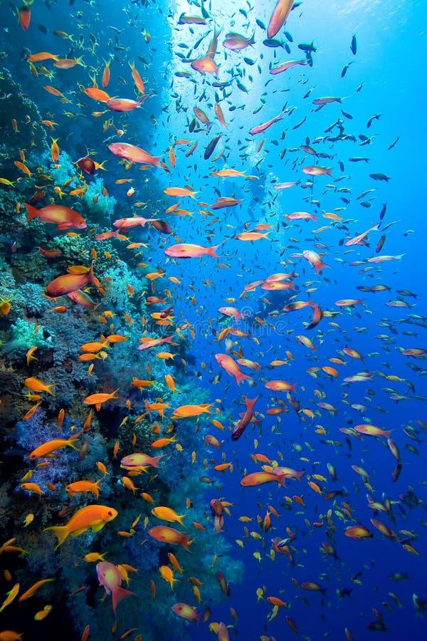 Υποβρύχια ζωή στοκ φωτογραφία με δικαίωμα ελεύθερης χρήσης