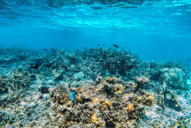 Υποβρύχια κοραλλιογενής ύφαλος και ψάρια σε Ινδικό Ωκεανό, Μαλδίβες στοκ εικόνες