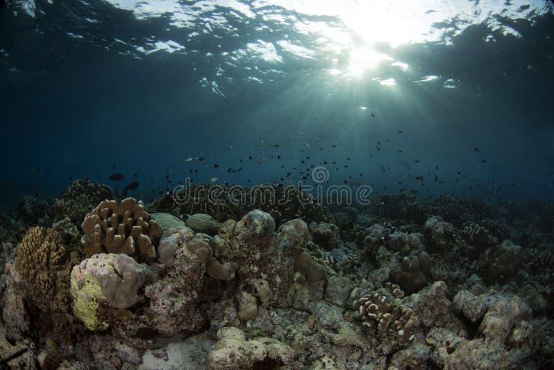 Υποβρύχια σκηνή με το μπλε υπόβαθρο στοκ φωτογραφίες με δικαίωμα ελεύθερης χρήσης
