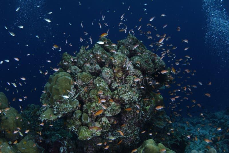 Υποβρύχια σύνοδος στοκ εικόνες