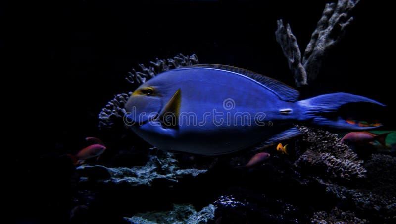 Υποβρύχια τροπικά ψάρια στοκ φωτογραφίες με δικαίωμα ελεύθερης χρήσης