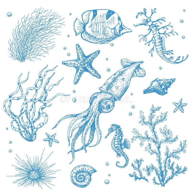 Υποβρύχια φυτά και ζώα καθορισμένα διανυσματική απεικόνιση