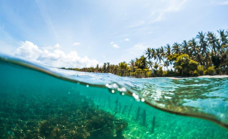 Υποβρύχιος διασπασμένος πυροβολισμός του κήπου ζιζανίων θάλασσας στοκ φωτογραφίες με δικαίωμα ελεύθερης χρήσης
