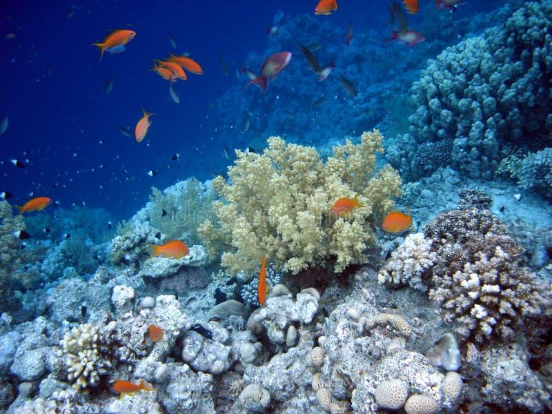 υποβρύχιος κόσμος στοκ εικόνες με δικαίωμα ελεύθερης χρήσης