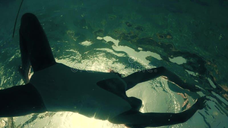 Υποβρύχιος πυροβολισμός μιας λεπτής νέας γυναίκας σε ένα λούσιμο μαγιό στη θάλασσα στοκ εικόνες με δικαίωμα ελεύθερης χρήσης