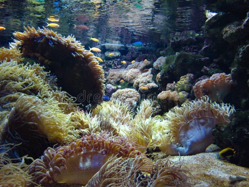 Υποβρύχιος τροπικός σκόπελος στοκ εικόνα