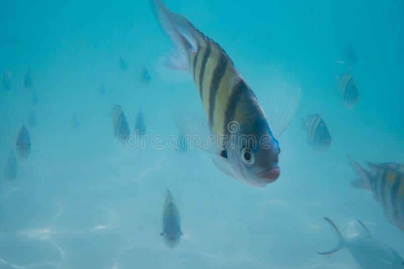 Υποβρύχιο κοπάδι ψαριών στοκ εικόνες