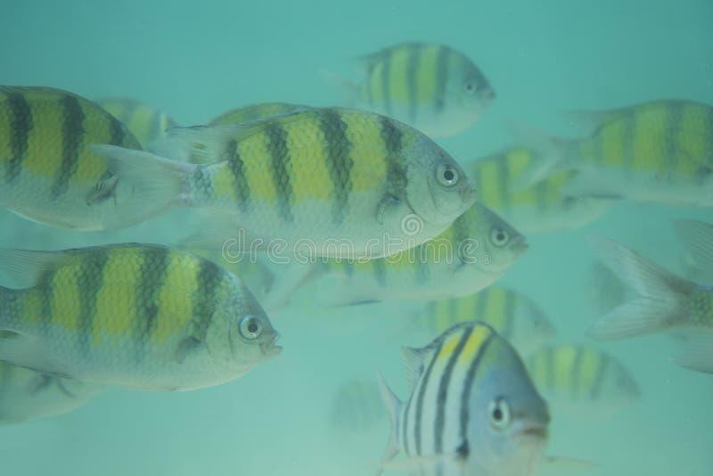 Υποβρύχιο κοπάδι ψαριών στοκ φωτογραφία με δικαίωμα ελεύθερης χρήσης