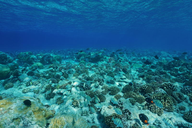 Υποβρύχιο σαφές νερό πατωμάτων Ειρηνικών Ωκεανών στοκ εικόνες με δικαίωμα ελεύθερης χρήσης