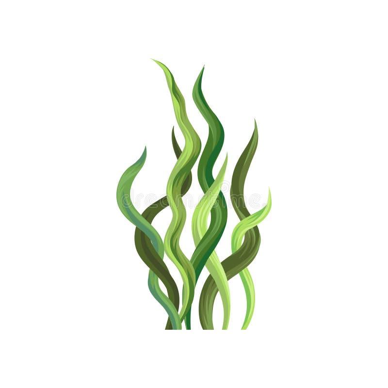 Υποβρύχιο φύκι, υδρόβια θαλάσσια διανυσματική απεικόνιση εγκαταστάσεων αλγών απεικόνιση αποθεμάτων