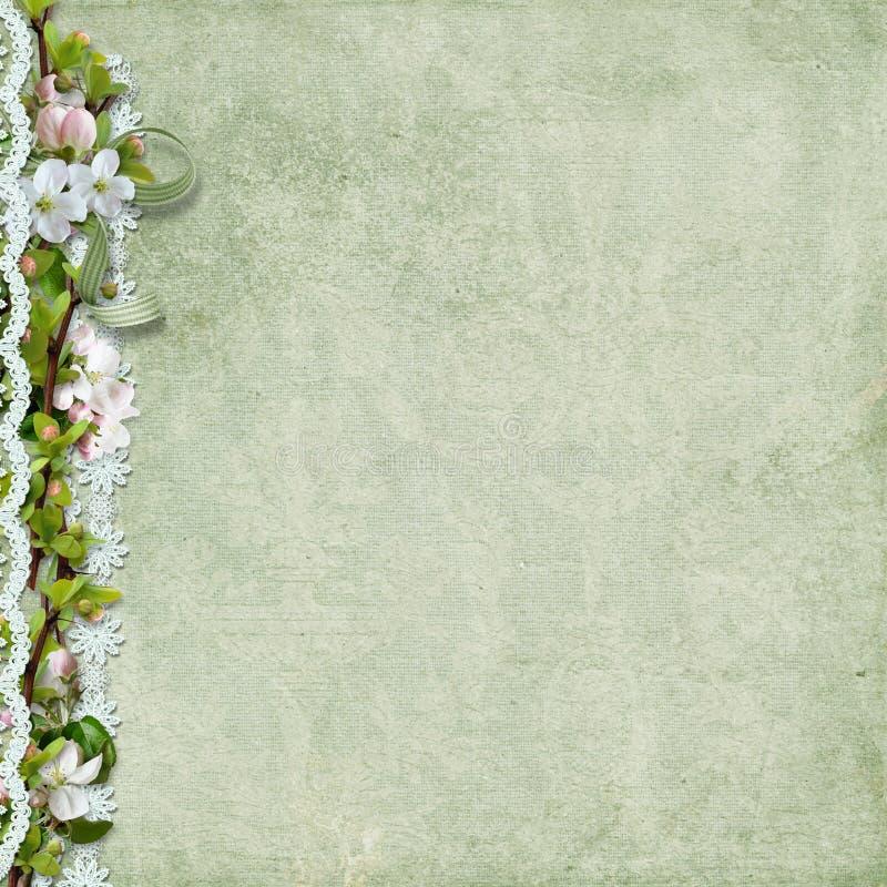Υπόβαθρο άνοιξη με τα λουλούδια και τη δαντέλλα μήλων ελεύθερη απεικόνιση δικαιώματος