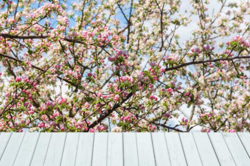 Υπόβαθρο άνοιξη με το ανθίζοντας δέντρο μηλιάς και τις άσπρες ξύλινες σανίδες στοκ φωτογραφίες με δικαίωμα ελεύθερης χρήσης