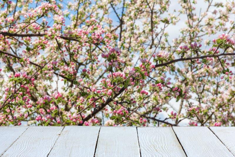Υπόβαθρο άνοιξη με το ανθίζοντας δέντρο μηλιάς και τις άσπρες ξύλινες σανίδες στοκ φωτογραφία με δικαίωμα ελεύθερης χρήσης