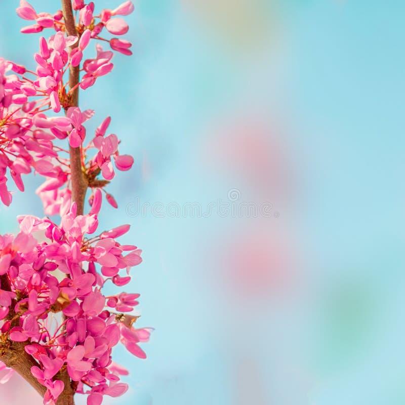 Υπόβαθρο ανθών άνοιξη Ανθίζοντας δέντρο πέρα από τη φύση backgroun στοκ εικόνες με δικαίωμα ελεύθερης χρήσης