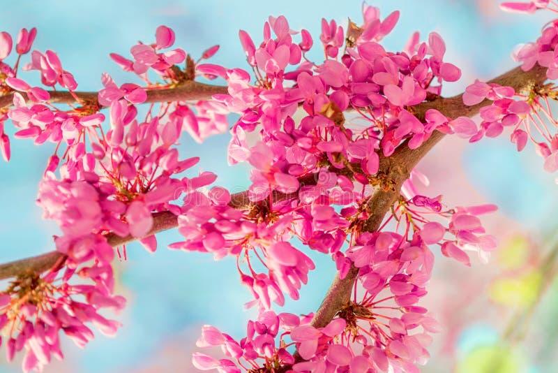 Υπόβαθρο ανθών άνοιξη Ανθίζοντας δέντρο πέρα από τη φύση backgroun στοκ εικόνες