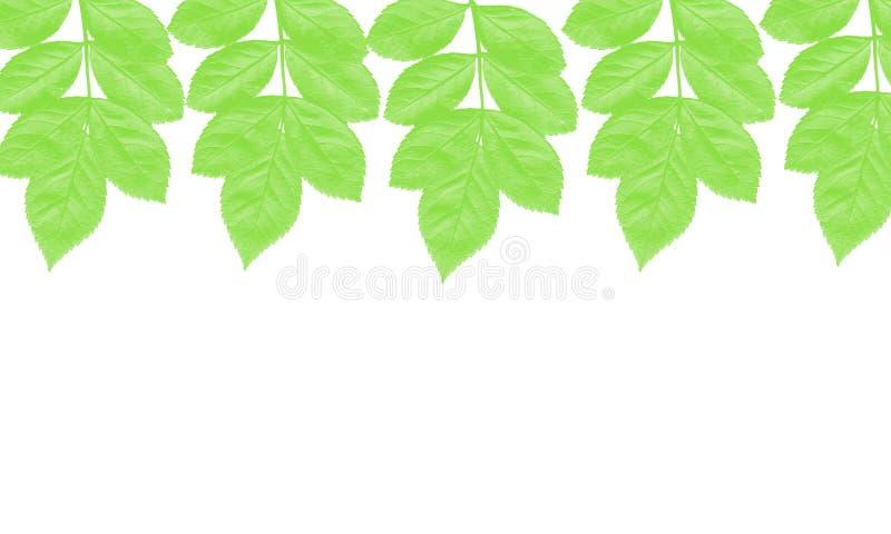 Υπόβαθρο απεικόνισης δέντρων φύλλων απεικόνιση αποθεμάτων