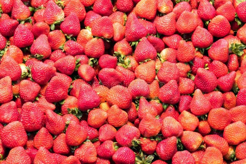 Υπόβαθρο από τις φρέσκες φράουλες στοκ εικόνες με δικαίωμα ελεύθερης χρήσης