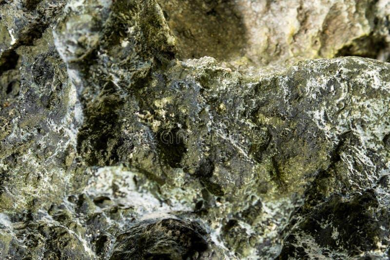 Υπόβαθρο βράχου με το φύκι στοκ εικόνες