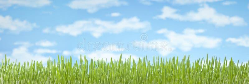 Υπόβαθρο εμβλημάτων ουρανού χλόης στοκ φωτογραφία με δικαίωμα ελεύθερης χρήσης