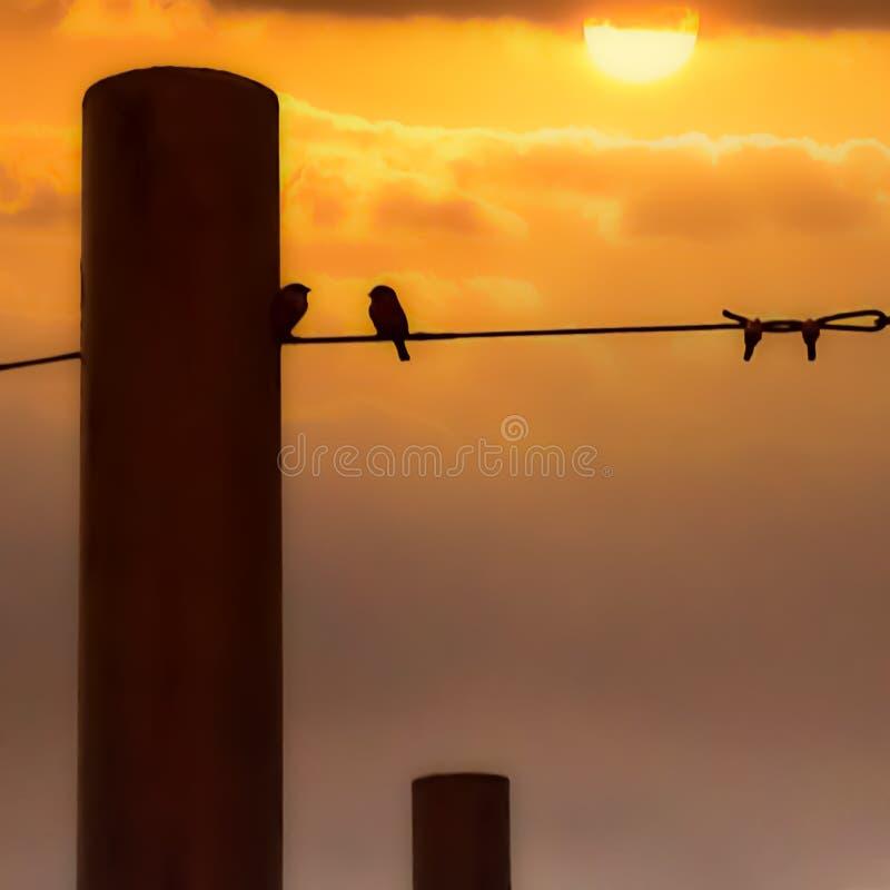 υπόβαθρο ηλιοβασιλέματος, φύση στοκ φωτογραφίες