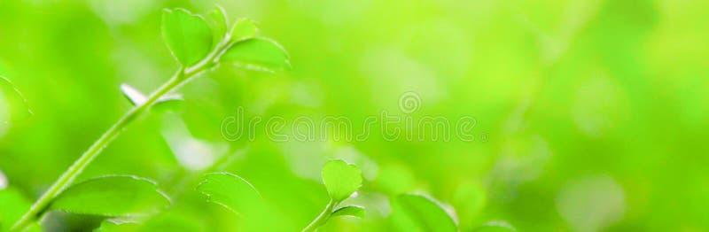 Υπόβαθρο θαμπάδων, σχέδιο μεγέθους εμβλημάτων φύλλων φύσης στοκ εικόνες με δικαίωμα ελεύθερης χρήσης