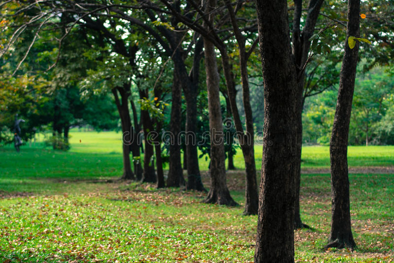 Υπόβαθρο θαμπάδων δέντρων στο πάρκο της Ταϊλάνδης στοκ εικόνα με δικαίωμα ελεύθερης χρήσης
