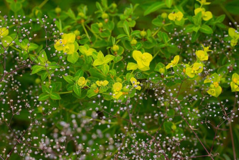 Υπόβαθρο κήπων σε πράσινο στοκ φωτογραφίες