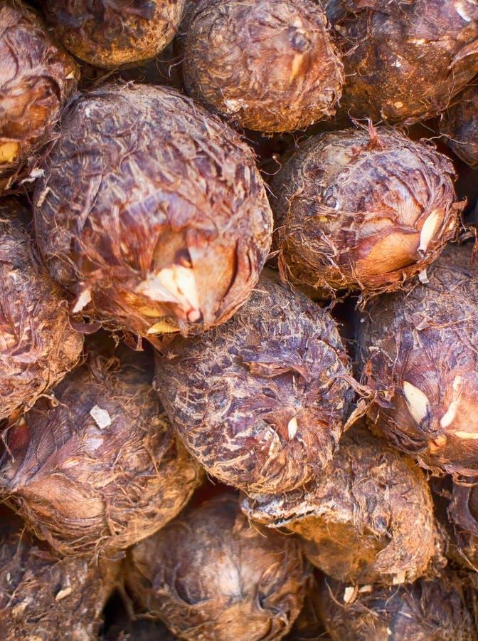 Υπόβαθρο καρύδων Καρύδες από την Ινδία στοκ εικόνα με δικαίωμα ελεύθερης χρήσης