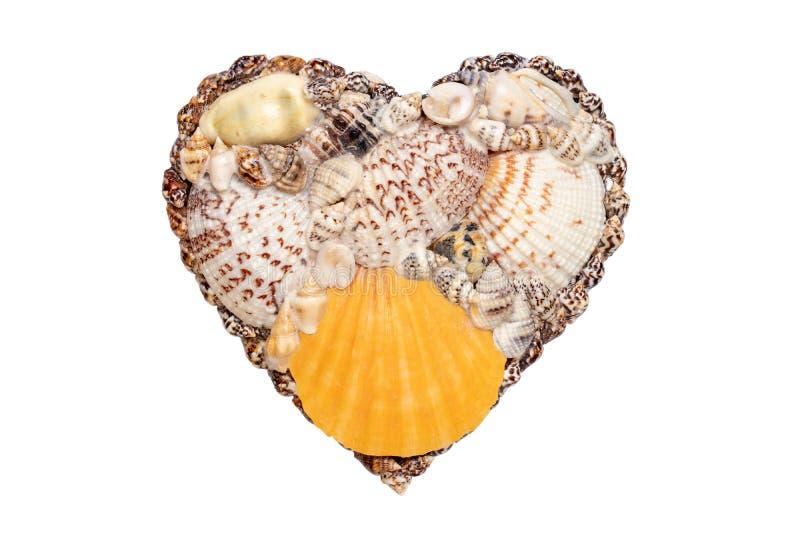 Υπόβαθρο κοχυλιών θάλασσας καρδιών Κινηματογράφηση σε πρώτο πλάνο της καρδιάς θαλασσινών κοχυλιών που απομονώνεται σε ένα άσπρο υ στοκ εικόνες με δικαίωμα ελεύθερης χρήσης