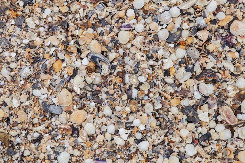 Υπόβαθρο κοχυλιών θάλασσας Σύσταση κοχυλιών θάλασσας στοκ εικόνες