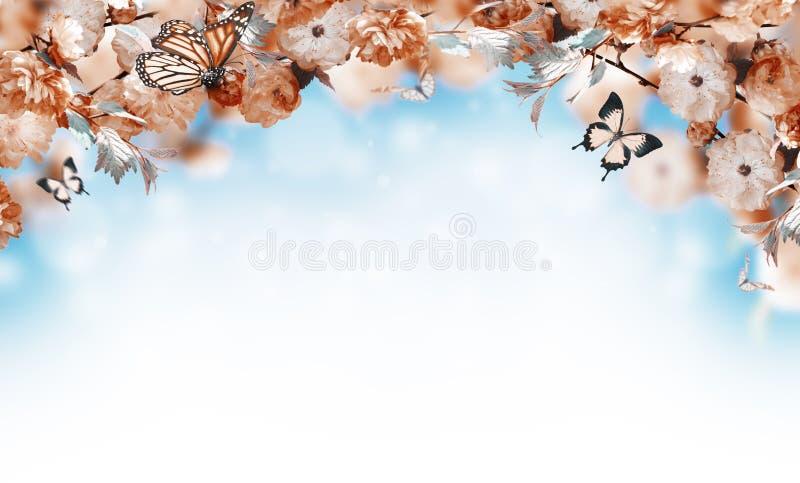 Υπόβαθρο λουλουδιών με το sakura άνοιξη κατάπληξης στοκ φωτογραφία με δικαίωμα ελεύθερης χρήσης