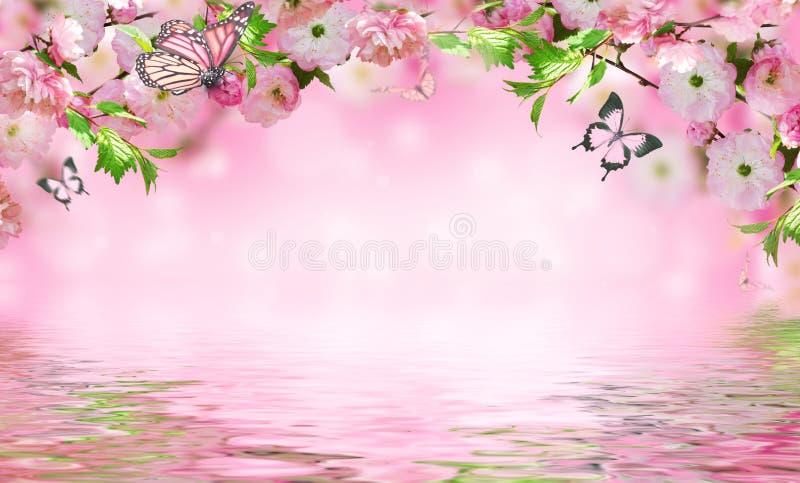 Υπόβαθρο λουλουδιών με το sakura άνοιξη κατάπληξης στοκ εικόνες με δικαίωμα ελεύθερης χρήσης