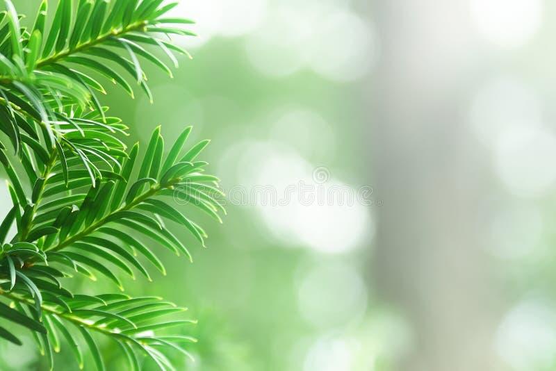 Υπόβαθρο με έναν κλάδο δέντρων που κολλά έξω στο αριστερό στοκ εικόνες