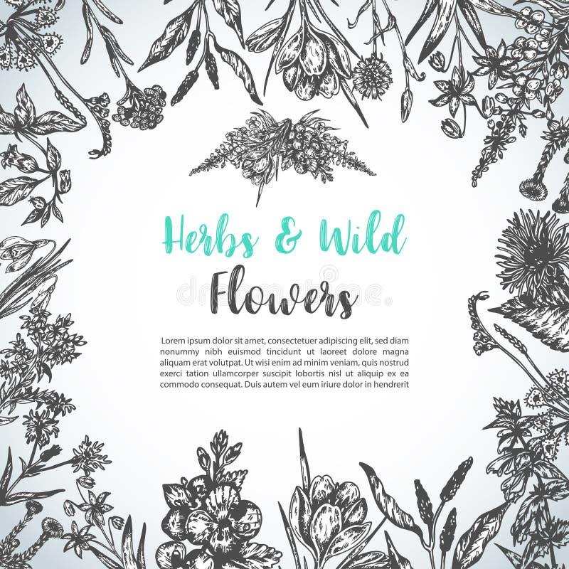 Υπόβαθρο με συρμένα τα χέρι χορτάρια και την άγρια εκλεκτής ποιότητας συλλογή λουλουδιών διανυσματικών απεικονίσεων πρόσκλησης εγ απεικόνιση αποθεμάτων