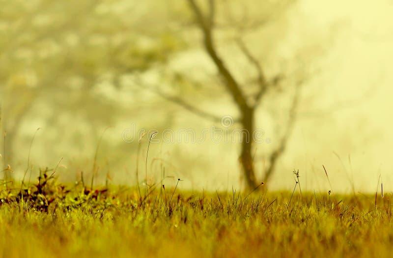 Υπόβαθρο με τα ζιζάνια και μαγικός του φωτός στην αυγή στο μέρος 4 φθινοπώρου στοκ φωτογραφίες