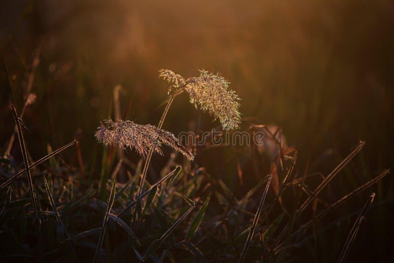 Υπόβαθρο με τα ζιζάνια και μαγικός του φωτός στην αυγή στο μέρος 20 φθινοπώρου στοκ φωτογραφία με δικαίωμα ελεύθερης χρήσης