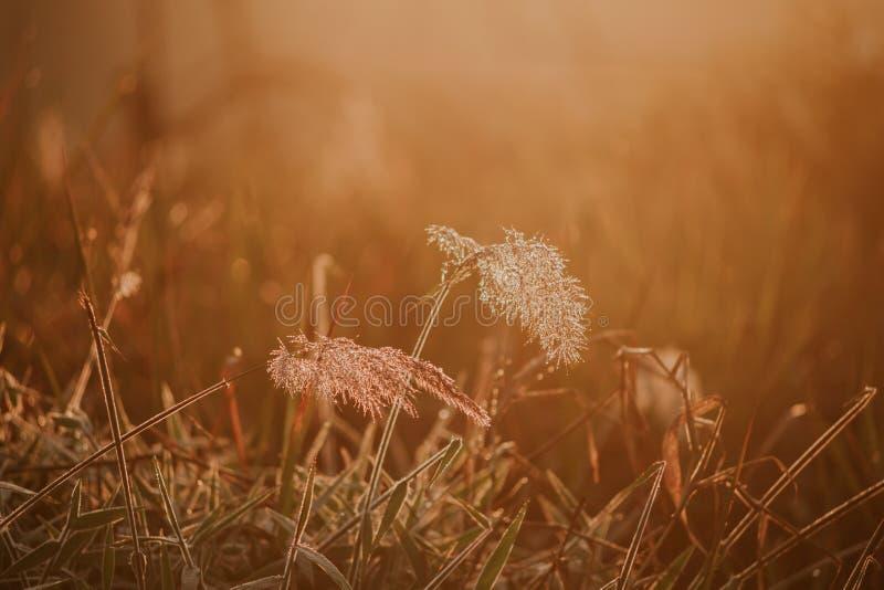 Υπόβαθρο με τα ζιζάνια και μαγικός του φωτός στην αυγή στο μέρος 21 φθινοπώρου στοκ εικόνες με δικαίωμα ελεύθερης χρήσης