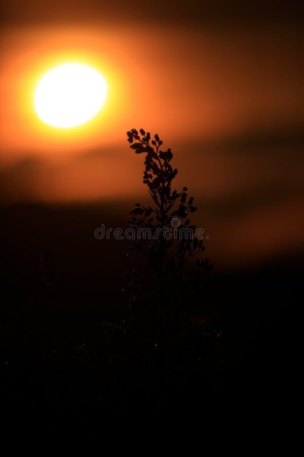 Υπόβαθρο με τα ζιζάνια και μαγικός του φωτός στο μέρος 2 αυγής στοκ φωτογραφία με δικαίωμα ελεύθερης χρήσης
