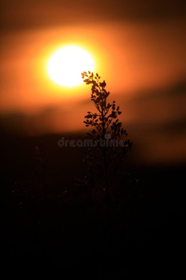 Υπόβαθρο με τα ζιζάνια και μαγικός του φωτός στο μέρος 4 αυγής στοκ εικόνες